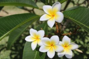 immagina di essere un fiore