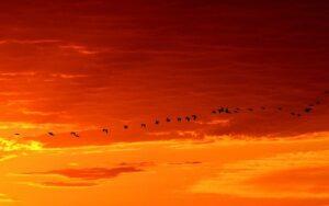 Pablo Neruda - Ode alla migrazione degli uccelli