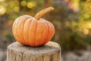 zucca autunno